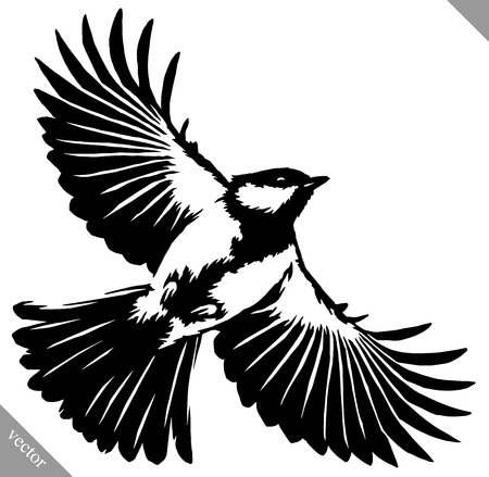 tomtit: black and white linear paint draw tit bird vector illustration Illustration