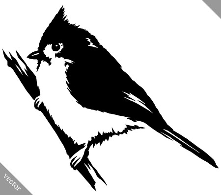 black and white linear paint draw cardinal bird vector illustration