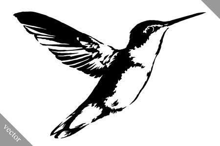 black and white linear paint draw hummingbird vector illustration
