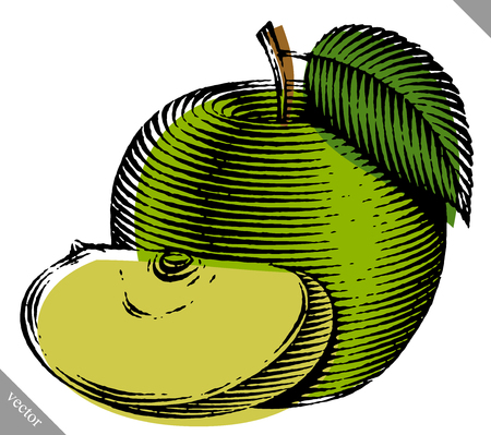 ripened: Engraved isolated old-styled vector illustration of an apple