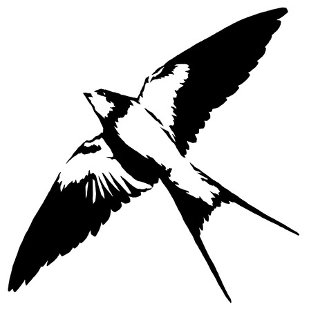 black and white  swallow illustration