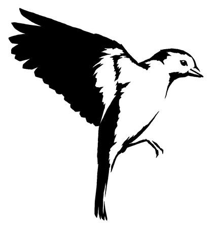 black and white  tit bird illustration