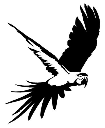 soar: black and white  parrot bird illustration