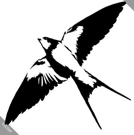 swallow bird: black and white linear  swallow bird illustration