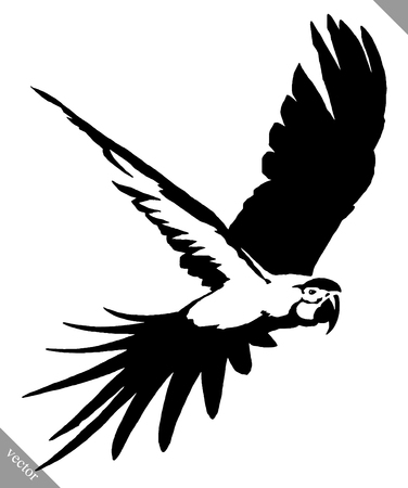 lovebird: black and white linear paint draw parrot bird illustration