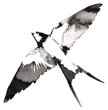 swallow bird: black and white painting with water and ink draw swallow bird illustration