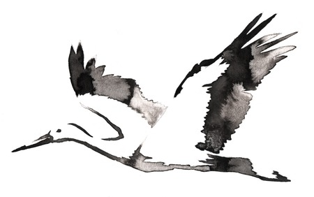 crane bird: black and white painting with water and ink draw crane bird illustration