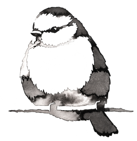 chickadee: black and white painting with water and ink draw tit bird illustration