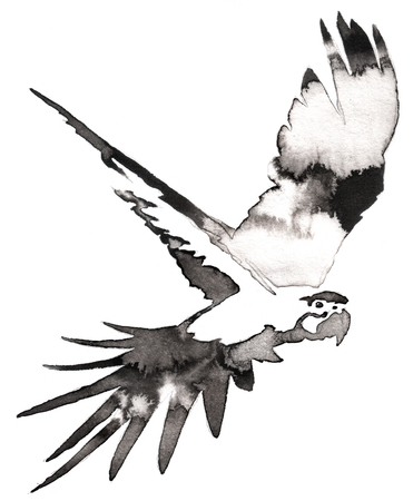 water bird: black and white painting with water and ink draw parrot bird illustration