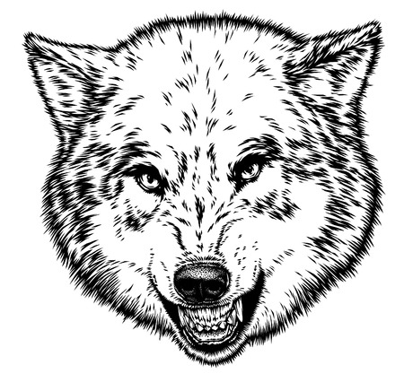 cruel zoo: engrave isolated wolf illustration sketch. linear art