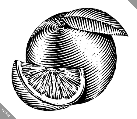 Engraved isolated old-styled  illustration of an orange