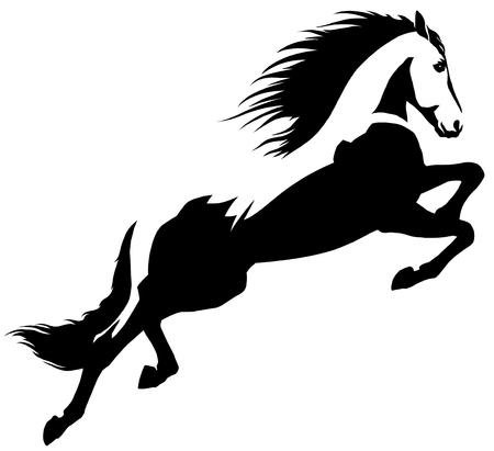 black and white linear draw horse illustration Reklamní fotografie