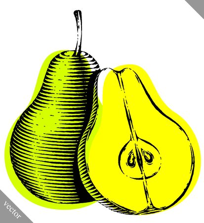 Engraved isolated old-styled engrave vector illustration of a pear Illustration