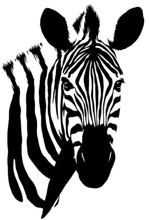 흑인과 백인 선형 페인트 무승부 얼룩말 그림 스톡 콘텐츠 - 73998271