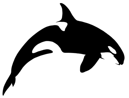 black and white linear paint draw killer whale illustration Stock Photo