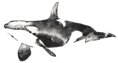 black and white monochrome painting with water and ink draw killer whale illustration