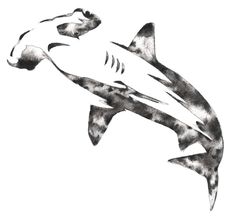 black and white monochrome painting with water and ink draw hammerhead illustration Stock Photo
