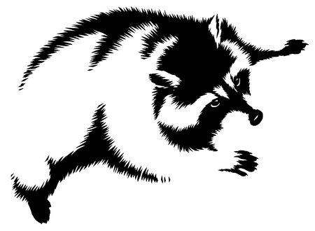 black and white linear paint draw raccoon illustration Stock Photo