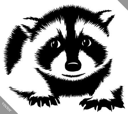 black and white linear paint draw raccoon vector illustration Illustration