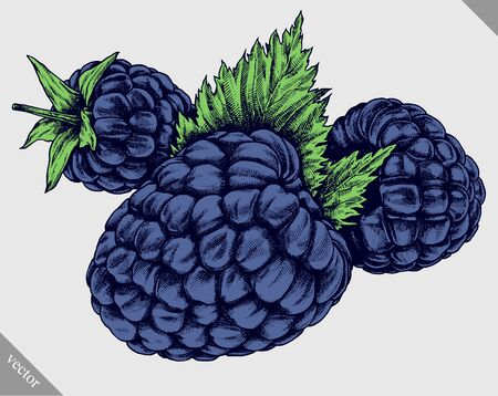 Engrave isolated BlackBerry hand drawn graphic vector illustration