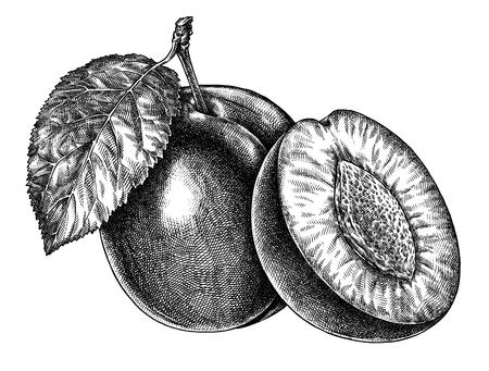 Engrave isolated plum hand drawn graphic illustration Stockfoto