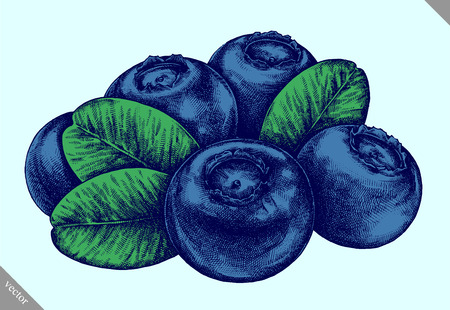 Engrave isolated blueberry hand drawn graphic vector illustration Ilustração