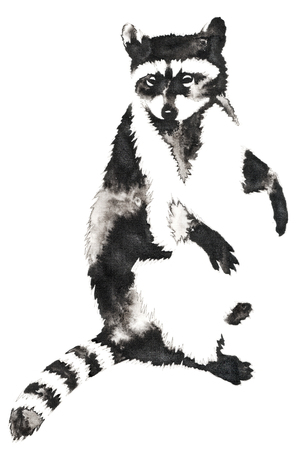 black and white monochrome painting with water and ink draw raccoon illustration Stock Illustration - 78349793