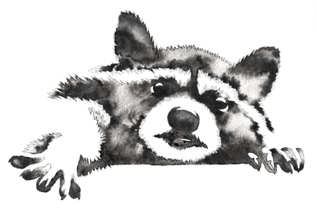 black and white monochrome painting with water and ink draw raccoon illustration