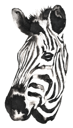 black and white monochrome painting with water and ink draw zebra illustration Imagens