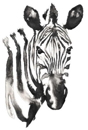 black and white monochrome painting with water and ink draw zebra illustration Stockfoto