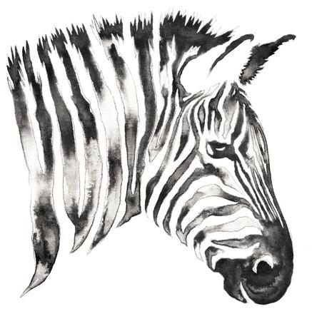 In bianco e nero pittura monocromatica con acqua e inchiostro disegnare zebra illustrazione