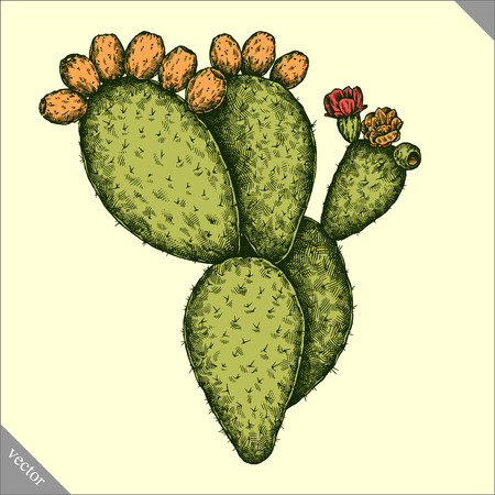 Engrave isolated prickly pear hand drawn graphic vector illustration Ilustrace