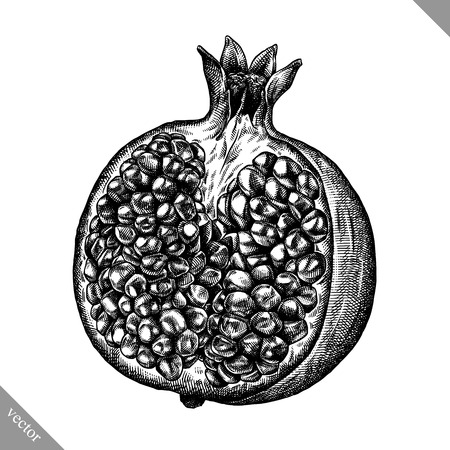 Engrave isolated pomegranate hand drawn graphic vector illustration