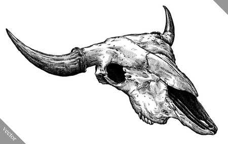 Engrave isolated cow skull hand drawn graphic vector illustration Illustration