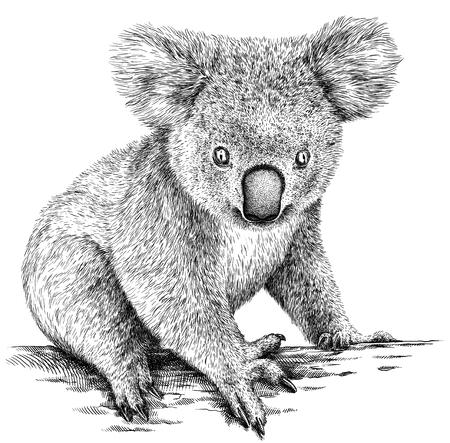 black and white engrave isolated Koala illustration Stock Photo