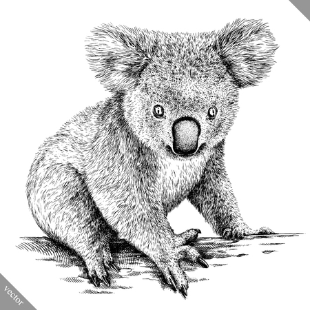 Black and white engrave isolated Koala illustration. 向量圖像