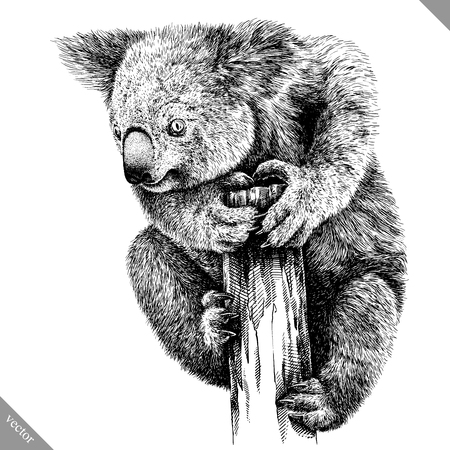 Zwart-wit graveren geïsoleerde Koala illustratie
