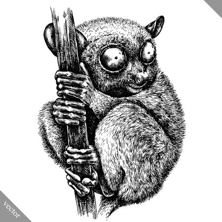 Black and white engrave tarsier on white background, vector illustration. 矢量图像