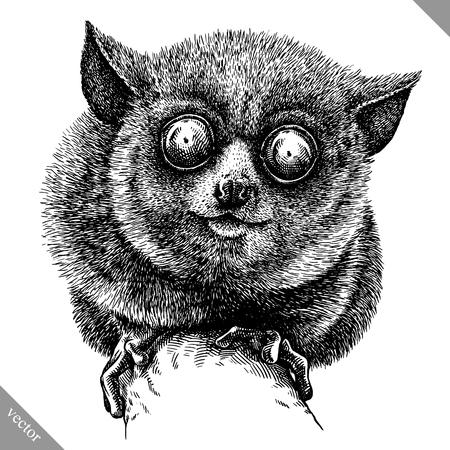 Noir et blanc graver tarsier sur fond blanc, illustration vectorielle.