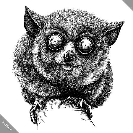 Zwart en wit graveren tarsier op witte achtergrond, vectorillustratie.