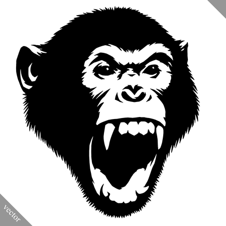 Black and white linear paint draw monkey vector illustration. Фото со стока - 91048875