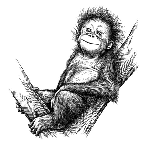 black and white engrave isolated monkey illustration