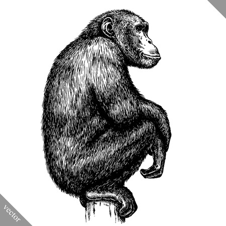 black and white engrave isolated monkey vector illustration  イラスト・ベクター素材