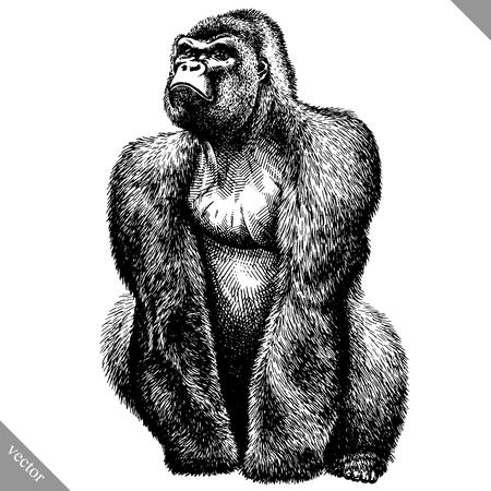 blanco y negro, grabar, aislado, mono, vector, ilustración