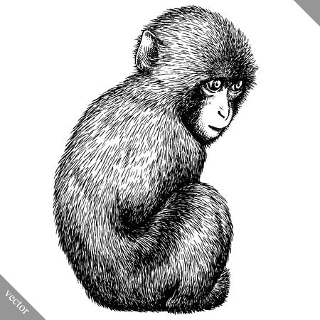 Black and white engrave isolated monkey icon.