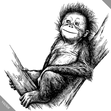Black and white engrave isolated monkey vector art