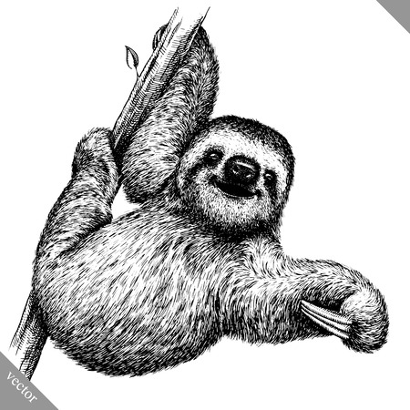 black and white engrave isolated sloth vector illustration