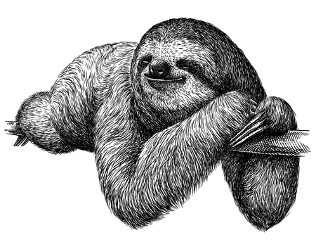 black and white engrave isolated sloth illustration Stock fotó
