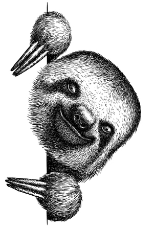 black and white engrave isolated sloth illustration 版權商用圖片