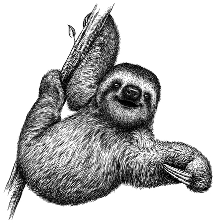 black and white engrave isolated sloth illustration Фото со стока